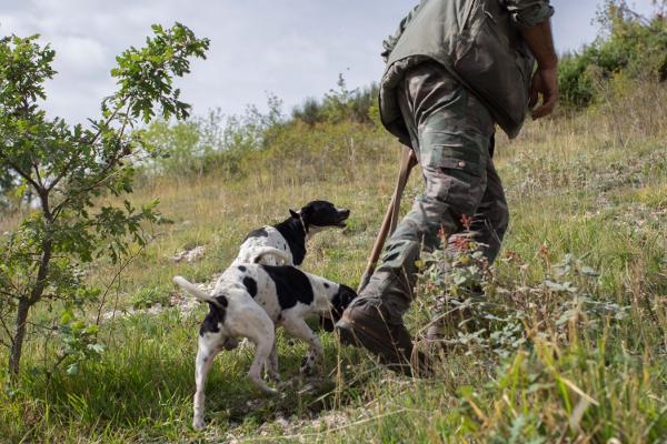 Activities Truffle Hunting